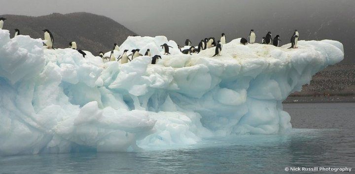 Adele-Penguins-on-an-iceberg-in-Antarctica