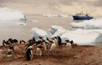 Antarctic-tableau.-Just-another-day-in-this-magical-place-with-penguins