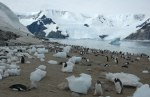 Antarctica-Emperor-penguins-at-Neko-Harbour