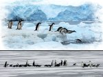 Antartica-and-King-Emperor-Penguins