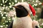 Ballagio-Christmas-garden-peguin
