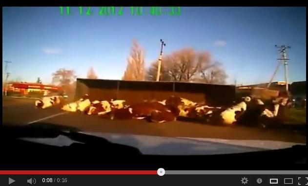 Στιγμιότυπο από 2012-12-30 20:17:22