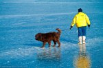 Man-and-dog-on-ice-during-polar-bear-plunge