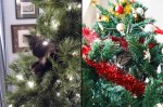 Oh-to-be-a-Cat-in-a-Christmas-tree