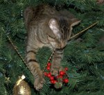 Willie-Cat-helping-take-down-the-Christmas-Tree