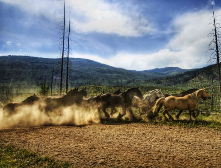 Stampede-of-the-Wild-Horses