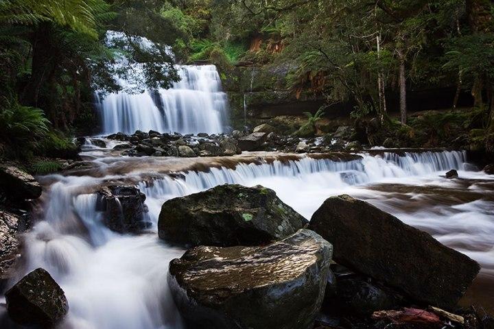 Liffey-Falls-Tasmanian-Wilderness