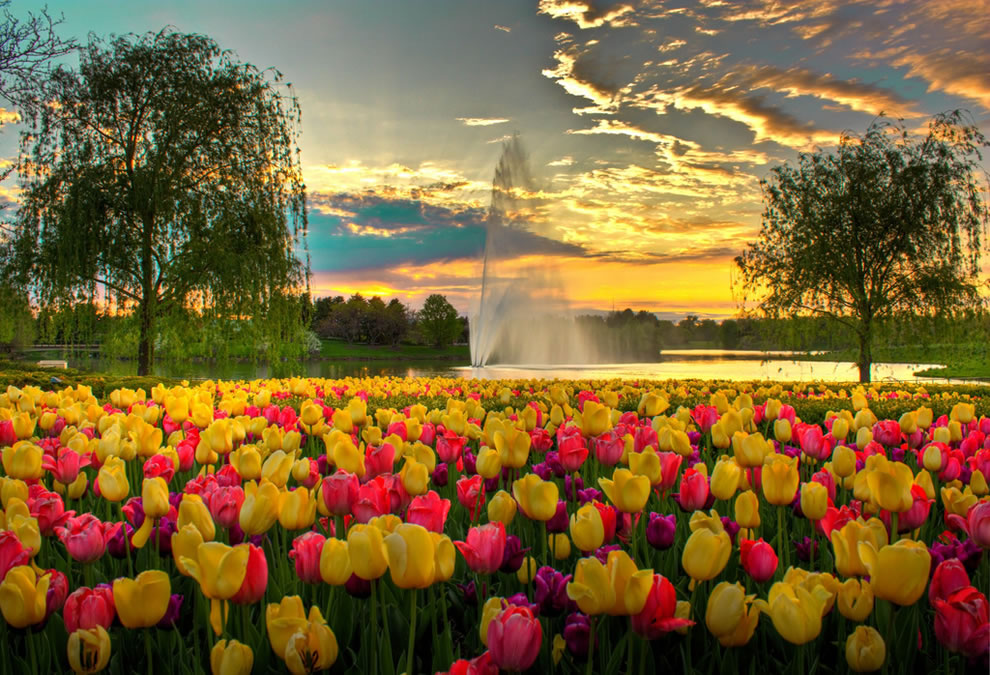 A-Colorful-Evening-at-Chicago-Botanic-Garden-tulips-and-fountain