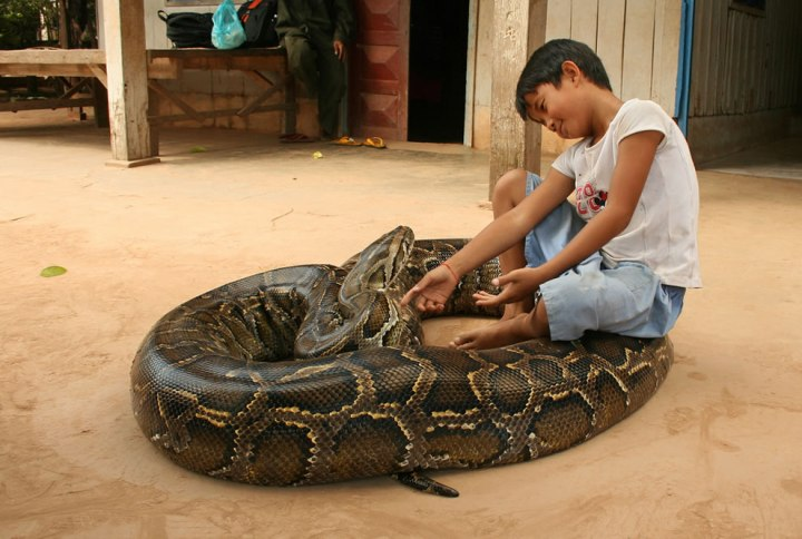9-year-old-boy-keeps-a-5-meter-long-python-snake-as-his-pet