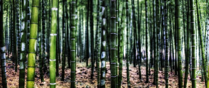 Anji-Bamboo-Garden-China