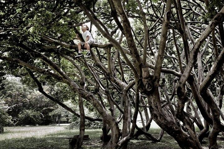 Little-boy-climbing