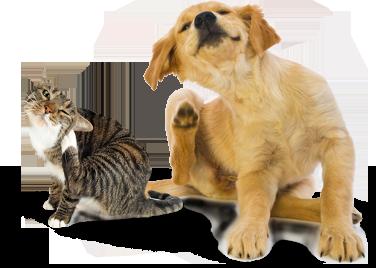 scratchingdogcat