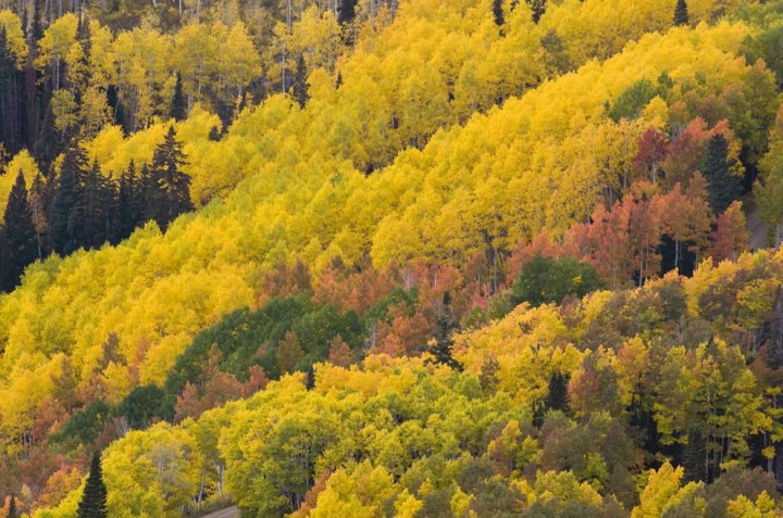 Autumn-in-Utah-Fall-colors-from-Empire-Pass-above-the-Deer-Valley-Resort-in-Park-City