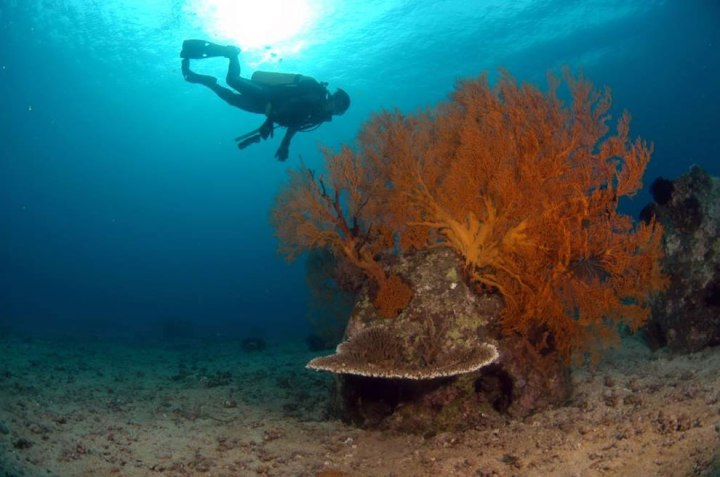 Reef-Ball-artificial-reef-with-diver